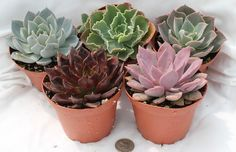 Review of easy-to-care apartment plants with descriptions, so you can decide which one is your plant soulmate.