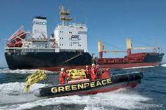 Resultado de imagem para greenpeace