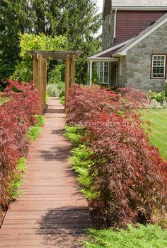 Curb appeal of Japanese maple trees and dwarf evergreens lining pathway to front door of house, with trellis, stone home, lawn, wooden walk Deck With Pergola, Cheap Pergola, Pergola Plans, Pergola Ideas, Garden Paths, Lawn And Garden, Doors Of Stone, Dwarf Japanese Maple, Pocket Garden