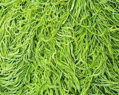 Acacia Limelight - Diaco's Garden Nursery and Garden Supplies Garden Nursery, Christmas 2016, Garden Supplies, Acacia, Shrubs, David, Gardens, Plants, Outdoor Gardens