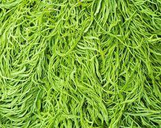 Acacia Limelight 1