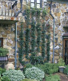Planning on trying this - training fruit trees up against the walls - a great way to make use of smaller garden