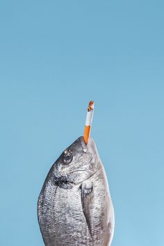 Fish, smoking is bad for your lungs! Still Life Photography, Creative Photography, Art Photography, Art Du Collage, Pop Art, Photo D Art, Inspiration Art, Fish Art, Art Sketchbook