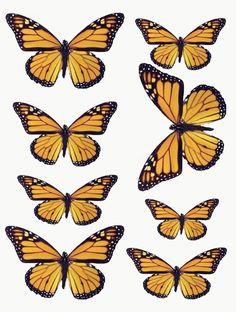 1348686422_55_FT838_sd_october_2012_butterflies.jpg 1.550×2.051 pixels