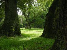 Rogalin - pałac i park Raczyńskich, zdjęcia po remoncie