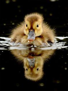 a wee paddlin' cutie. :)