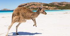 Liebe Urlaubspiraten, auf geht's nach Australien! Günstige Hin- und Rückflüge gibt es jetzt für 673€! Schnell buchen!