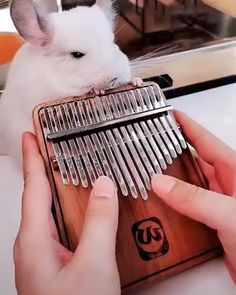 Geek Discover Hey loversthis Kalimba is absolutely amazing Absolutely wonderful instrument Pop up different melody Kalimba Instruments Cute Animals Animals And Pets Cool Things To Buy Stuff To Buy Funny Animal Videos Clever Inventions Cool Stuff Cute Funny Animals, Cute Baby Animals, Funny Animal Videos, Kalimba, Piano Music, Cool Things To Buy, Stuff To Buy, Cute Babies, Cool Stuff