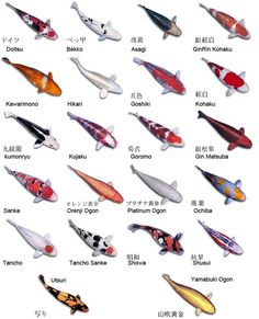 koi descriptions