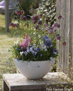 Große Schale, bepflanzt mit verschiedenen Zweibelblumen wie Schachbrettblume, Hyazinthen und Traubenhyazinthen und