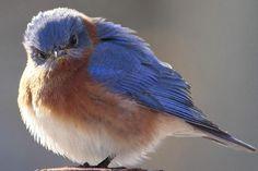 Cute little mean bird.:)