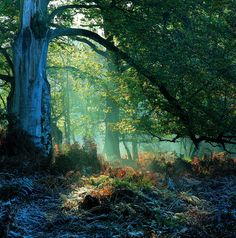 Gorgeous New Forest. It is indeed. Many a lovely holiday spent camping and walking in this sumptuously forested region of the UK. If you haven't been there please do go! #forest #wood