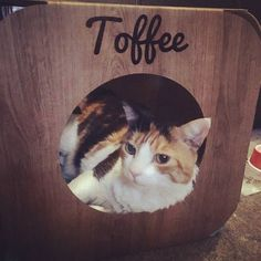 Look at sweet little Toffee  she is too cute!   #cat #catsofinstagram #cats_of_instagram #catfurnature #catfurniture #catsinboxes #cattoy #INSTACAT_MEOWS #cutecat #PurrMachine #catsinboxes #catbox #Excellent_Cats #BestMeow #dailykittymail #thecatniptimes #catcube #catpod #ArchNemesis #FlyingArchNemesis #myindoorpaws #ififitsisits #cutecatcrew #catchalet #catnip #themeowdaily #kitty #catpyramid #miuandmaosfurriends
