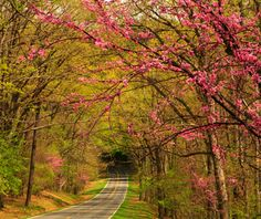 Spring Road Trip Idea: Skyline Drive, Virginia