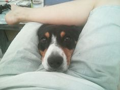 15hilarious dogs who have absolutely nounderstanding ofpersonal space