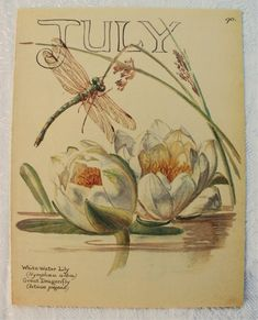 Vintage Botanical Book Plate - July - Water Lily - Dragonfly - Summer - Country Diary of an Edwardian Lady - Edith Holden Edith Holden, Vintage Cards, Vintage Postcards, Water Lily Tattoos, Bird Book, Botanical Illustration, Botanical Prints, Vintage Prints, 3 D