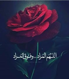 Love Quotes Wallpaper, Islamic Quotes Wallpaper, Quran Verses, Quran Quotes, Arabic Love Quotes, Arabic Words, Muslim Images, Love You Best Friend, Islam Beliefs