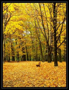 Bytom, Poland Colorful Pictures, Pretty Pictures, Cool Photos, Ur Beautiful, See World, Autumn Scenery, Desktop Pictures, Exotic Places, Walk In The Woods