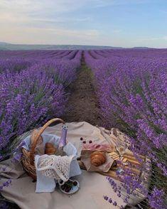 Dreamy lavender getaway. #inspo #travel #picnic #vacation #lavenderfield #nature #goals Lavender Aesthetic, Nature Aesthetic, Flower Aesthetic, Purple Aesthetic, Summer Aesthetic, Travel Aesthetic, Summer Vibes, Lightroom Gratis, Picnic Date