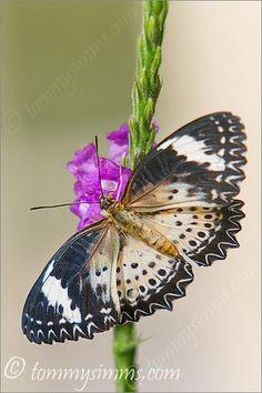 Butterfly Pose | Flickr – Compartilhamento de fotos!