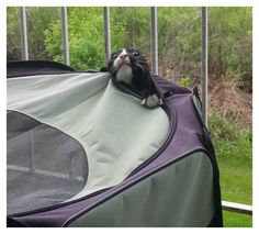 20 Hilarious Photos Of Animals Being Clumsy - Page 3 of 5