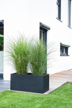 Pflanzkübel Anthrazit sind echte Trendobjekte im Garten. Der Pflanztrog sieht mit Gräsern bepflanzt einfach klasse aus.