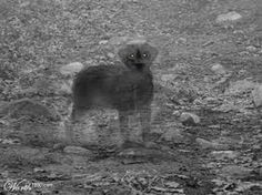 Ed and Lorraine Warren: Pets Who Survive The Grave | The Fortean Slip