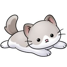 Cat cute. Best cats gato