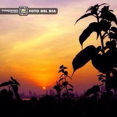 F O T O  D E L  D I A  Felicitaciones @marlisangulo Localización: Cartagena  Continúen etiquetando sus fotos con el Tag #igerscolombia mostrando lo más lindo y diverso de nuestro país para que puedan ser seleccionados como foto del día.  Foto seleccionada por  @diegonzalez  =================================