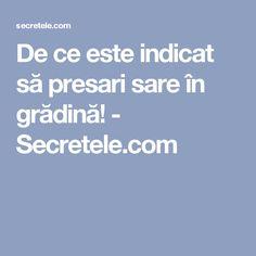 De ce este indicat să presari sare în grădină! - Secretele.com