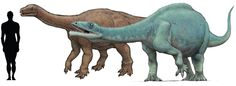 1. Melanorosaurus readi 2. Lessemsaurus sauropoides