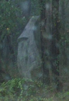 Ghost In The Woods. This makes me very sad. I feel like he was just dumped in the woods, and this is his spirit--- looking soo lost.