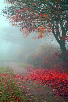 Der Nebel ist die schönste Form der Verschleierung by Mah Nava
