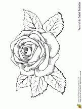 grande rose saint valentin