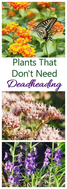 Don't spend your summer with a pair of scissors in your hand in the garden. Instead use plants that don't need deadheading Flower Gardening, Flower Garden Design, Planting Flowers, Container Gardening, Deadheading Flowers, Indoor Garden, Garden Plants, Patio Plants, Garden Pond