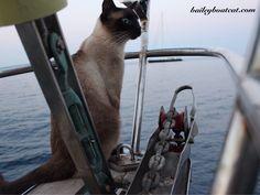 Fin-tastic weekend!  Bailey Boat Cat