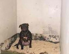 poor lennox......  read his story on http://www.examiner.com/article/lennox-s-family-s-historic-fight-against-breed-specific-legislation-continues and sign petition to save him....love pittbulls