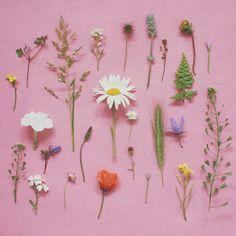 wildflowers deconstructed