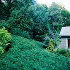 Stop Mowing that Slope -   Save yourself hours of effort every week by planting a collection of evergreens on a hard-to-mow slope. They'll keep it looking good all year long, stop erosion, and smother most weeds so you can just sit back and enjoy the view.  --  BHG