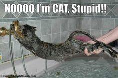 Cats don't Swim!
