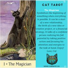 Monthly readings on my YouTube channel: www.youtube.com/c/cattarot Book your reading: www.cattarot.ca Love, Cat #tarot #tarotcards Everything Is Possible, New Relationships, Tarot Cards, The Magicians, Affirmations, Channel, Positivity, Reading, Cats