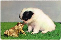 Doggy and Froggy - vintage postcard Vintage Dog, Vintage Images, Love People, Little People, Japanese Chin, Animal Pictures, Horses, Cats, Animals