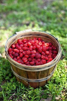 Bushel of Red Raspberries