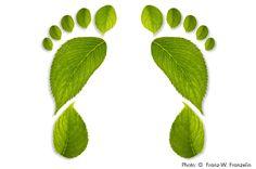 carbon-footprint. LivingGreenMag.com