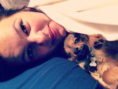 Ted Chihuahua x Papillion   Pawshake