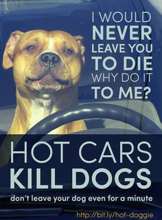 hot cars kill dogs (and children)