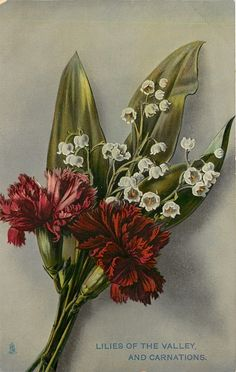 LILIES OF THE VALLEY AND CARNATIONS