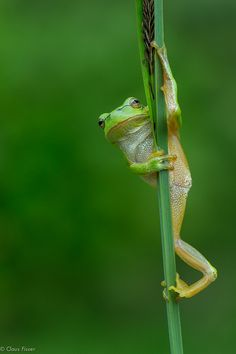 Pole Dance by Claus Fiss