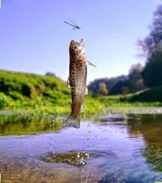 The most amazing bass fishing lures Trout Fishing Tips, Pike Fishing, Carp Fishing, Saltwater Fishing, Kayak Fishing, Fishing Stuff, Fishing Photos, Fishing 101, Fishing Tricks