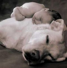 Kids and Pets- Another Piece to your Resident Retention Puzzle